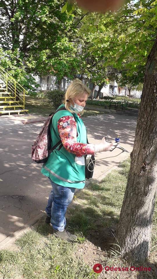 В Одессе вакцинируют каштаны от минирующей моли