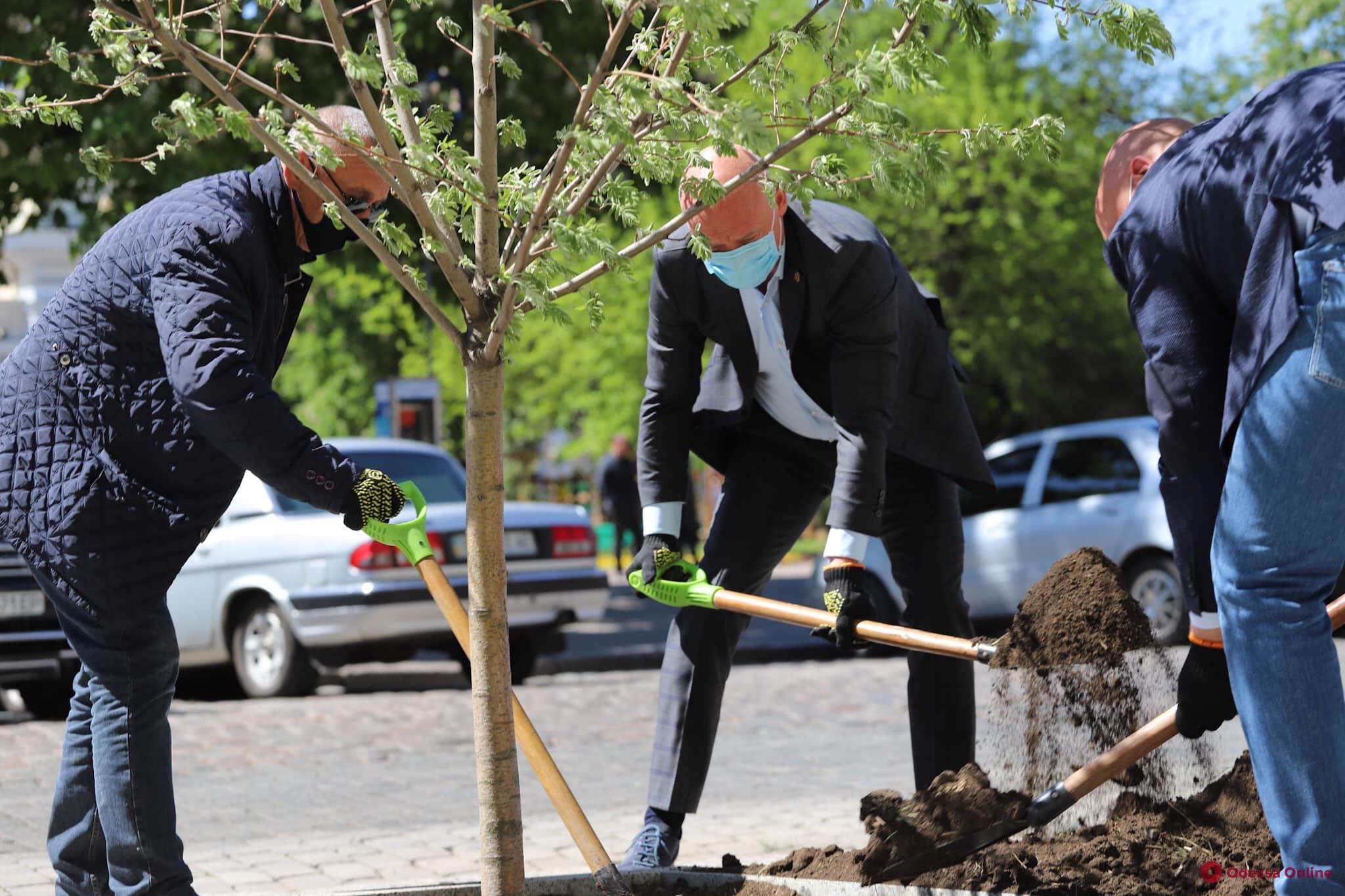 Во главе с мэром Одессы: возле дома Руссова высадили деревья (фото)