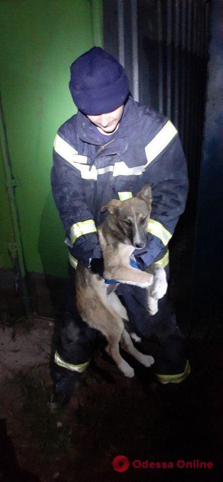В Одесской области спасли застрявшую между гаражей собаку