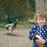 Одесский зоопарк открылся после карантина