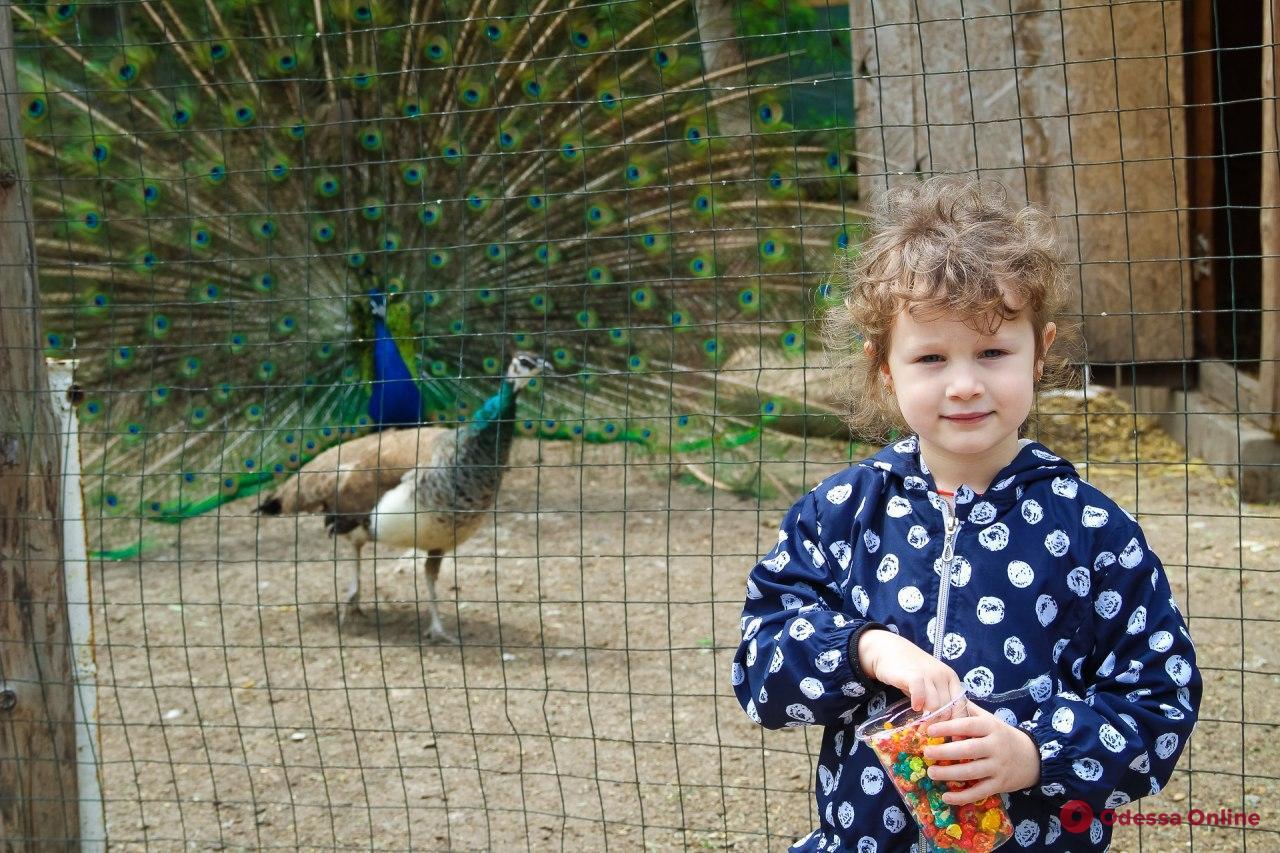 Одесский зоопарк открылся после карантина (фоторепортаж)