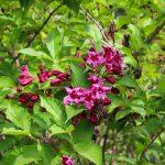 Цветы в Одесском ботсаду