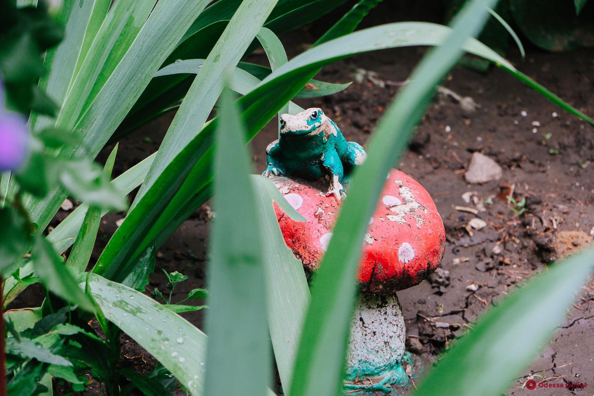 Влюбленные лягушки, гномы и волк верхом на осле: живописный одесский дворик (фото)