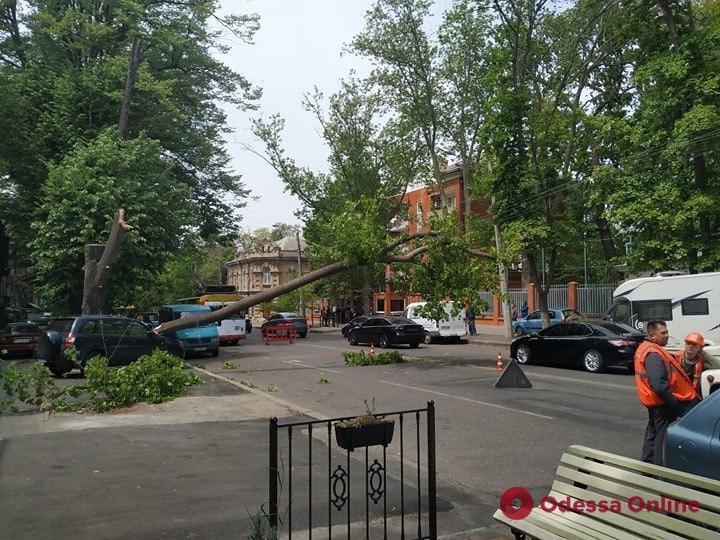 На Успенской крупная ветка рухнула на дорогу — парализовано движение троллейбусов (фото, обновлено)