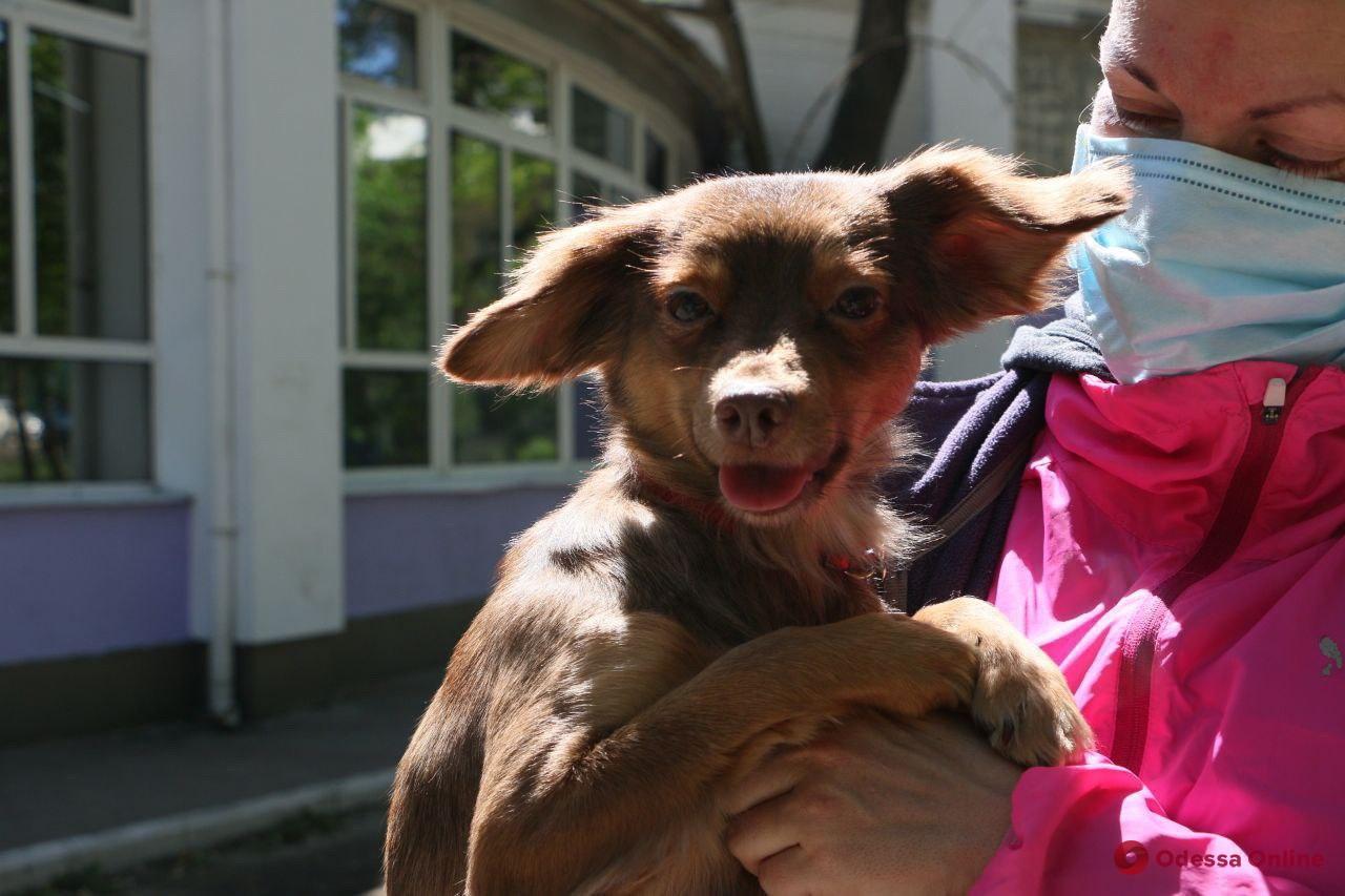 Жили в аду: спасенным от одесской живодерки собакам нашли новых любящих хозяев (фото)