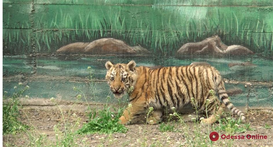 Одесский зоопарк проводит онлайн-экскурсии (видео)
