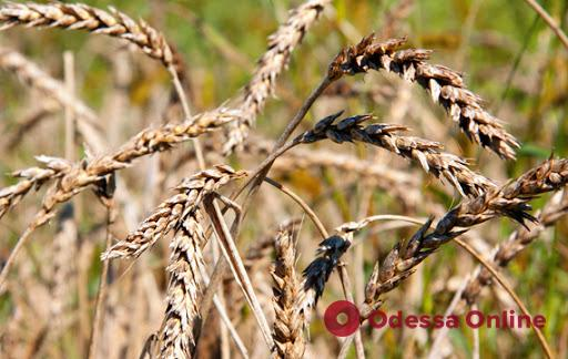 Белгород-Днестровский район объявлен зоной чрезвычайной ситуации из-за массовой гибели урожая