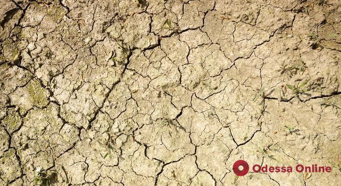 Из-за засухи потерял весь урожай: в Одесской области фермер покончил жизнь самоубийством