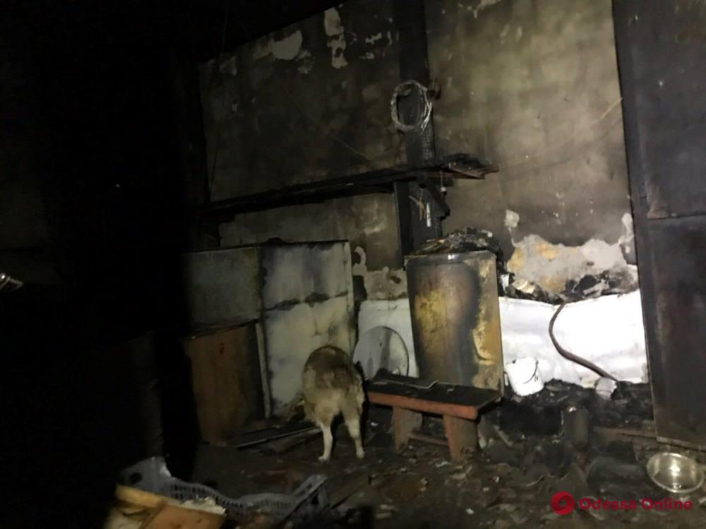 Во время пожара в одесском приюте «Ковчег» спасли 40 котов и 350 собак