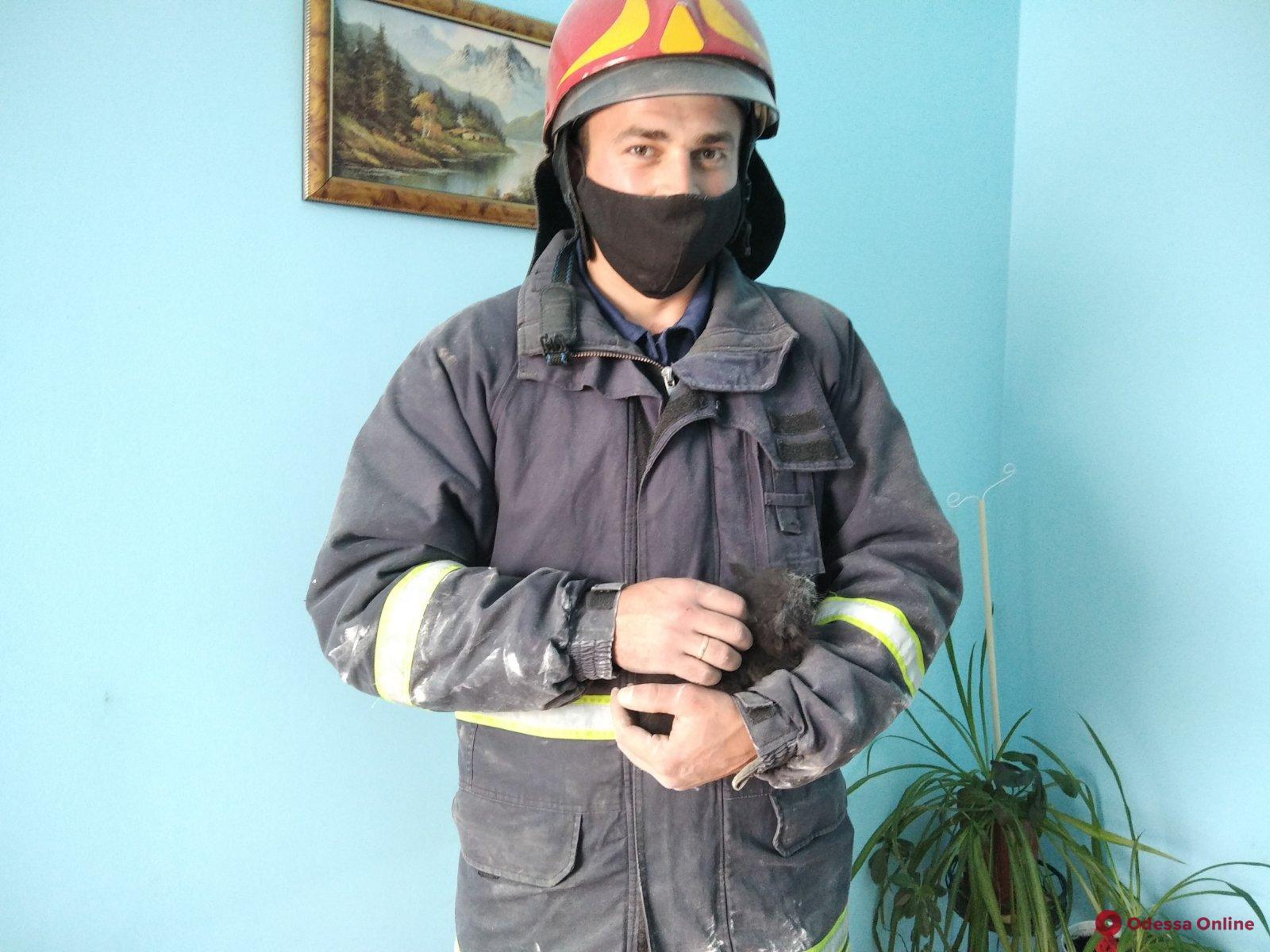 В Подольске спасли котенка из вентиляционной шахты