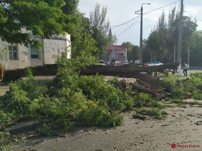 На Мельницкой крупное дерево рухнуло на дорогу — поврежден автомобиль (фото, видео, обновлено)
