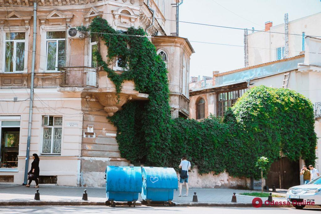 Зеленая Одесса: растения, которые победили в схватке с камнем и бетоном (фоторепортаж)