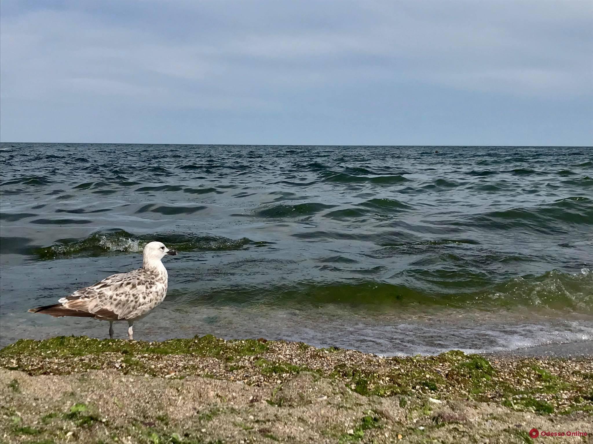 Одесситов и гостей города просят не купаться на девяти пляжах
