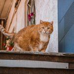 Молдаванка погода кот коты