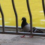 парк победы погода голубь голуби