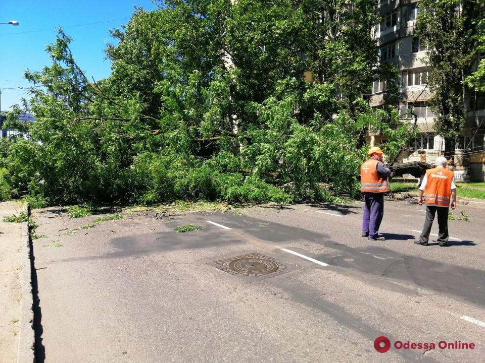 Упавшее дерево перекрыло Люстдорфскую дорогу