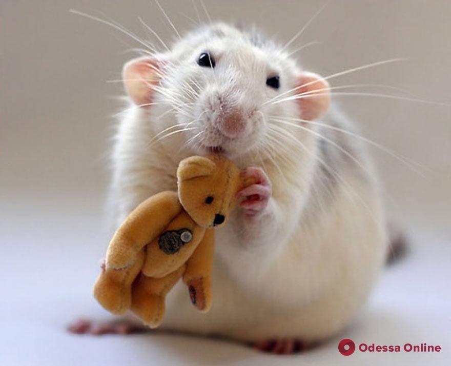 Из горящей квартиры одесские спасатели вынесли кота и декоративную крысу
