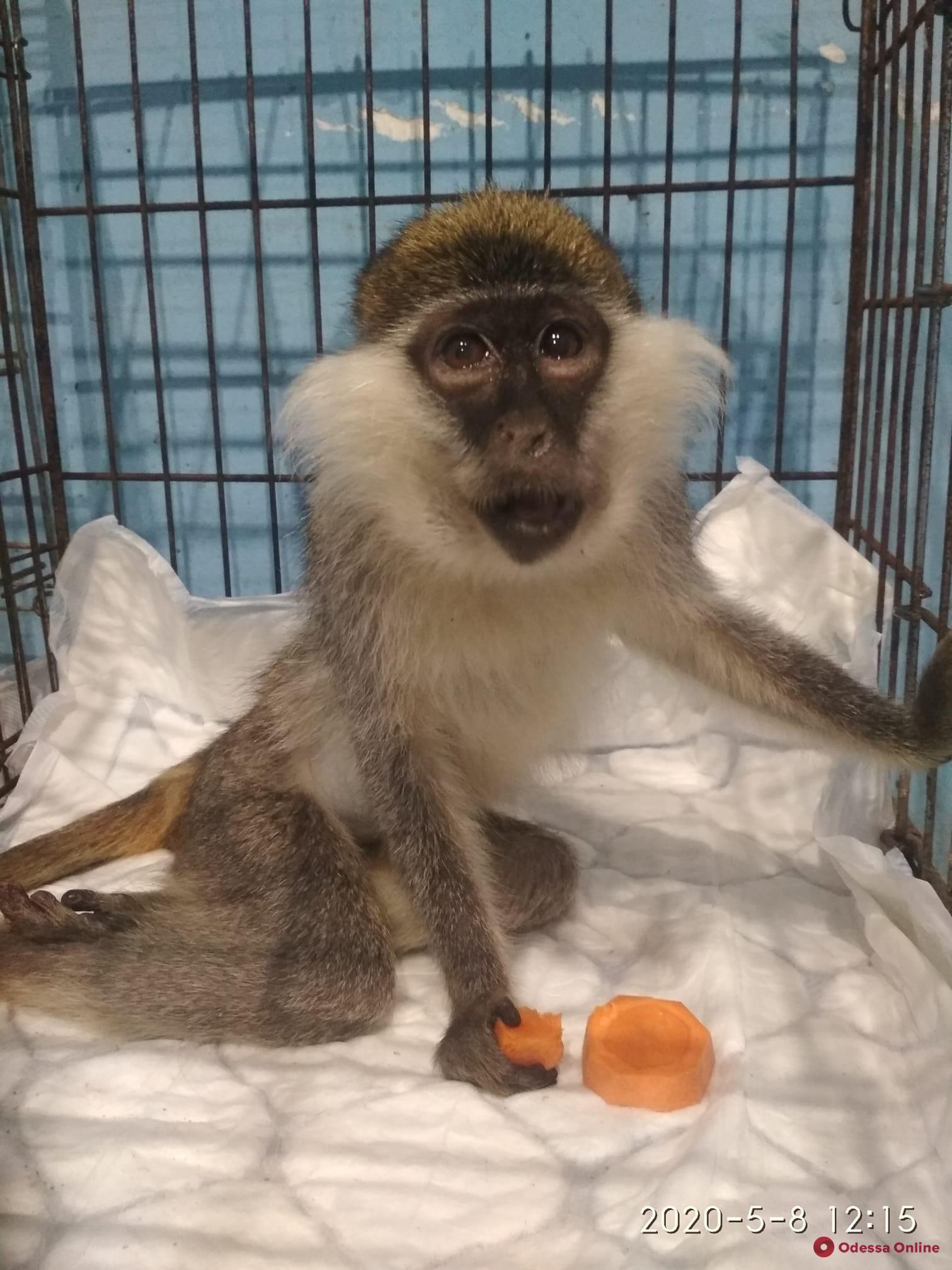 На Приморский бульвар вернулись фотографы с обезьянками
