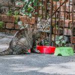 Молдаванка двор погода кот коты