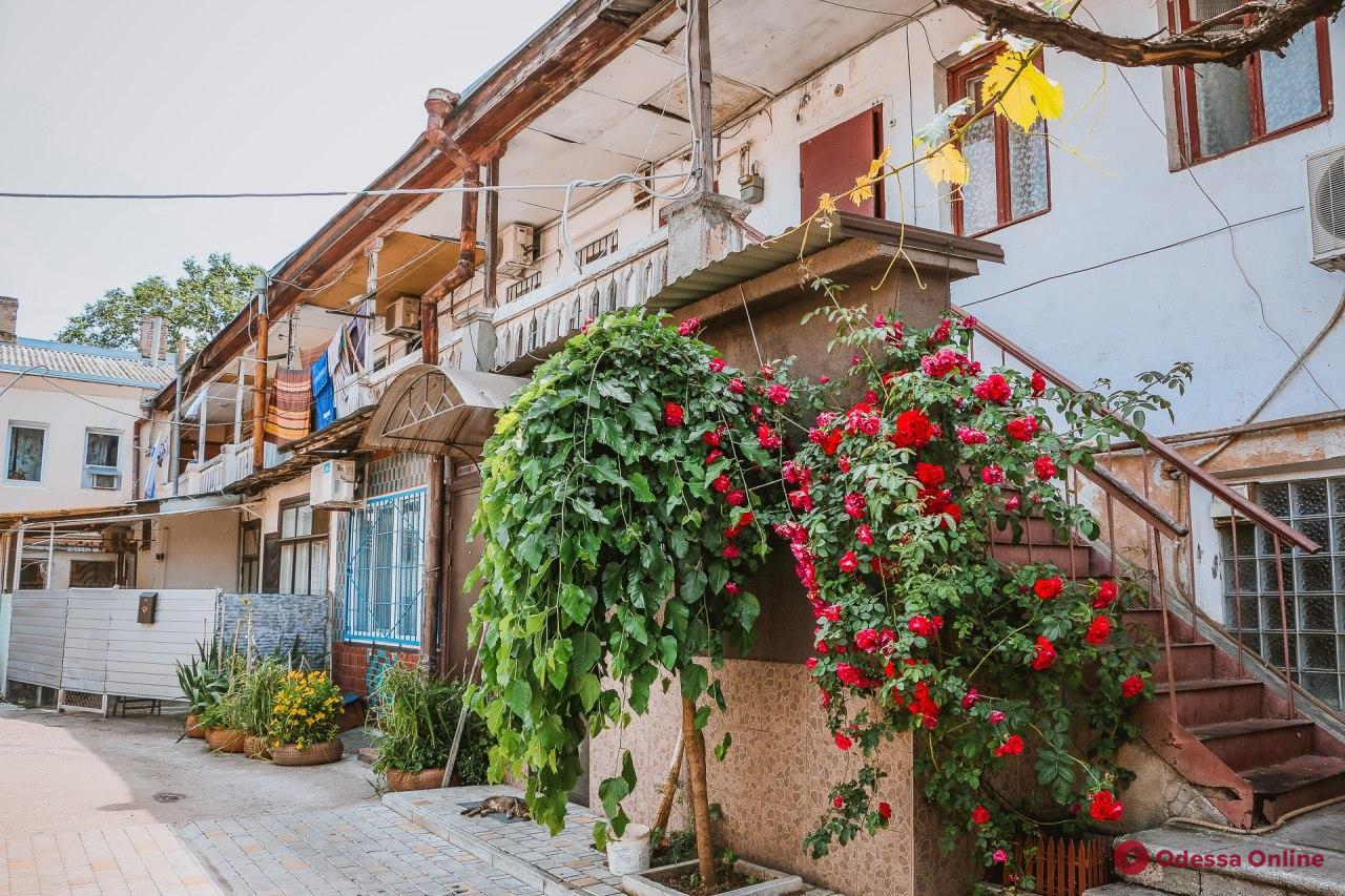 Уют одесской Молдаванки: улица Болгарская (фоторепортаж)