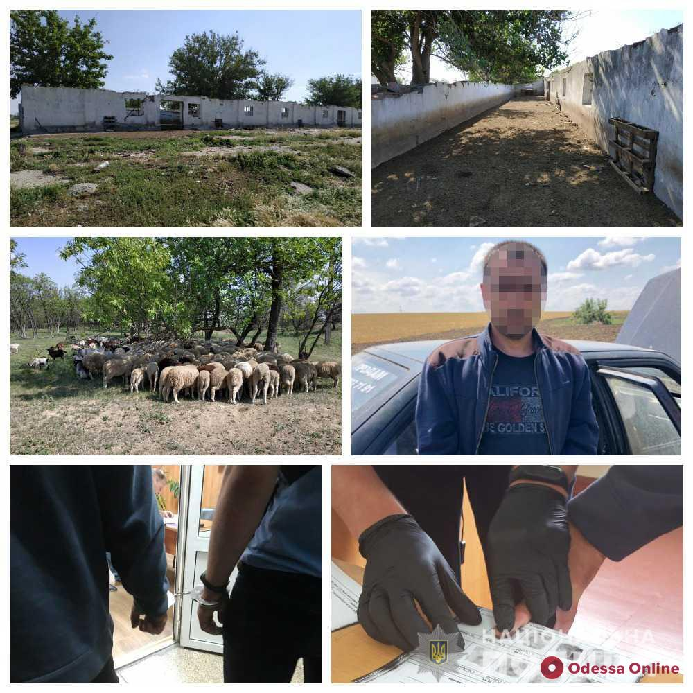 Житель Одесской области украл у фермера отару овец и коз на 300 тысяч