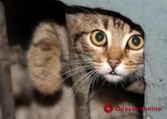 В Одессе из замурованного подвала спасали кошку и котят (видео)