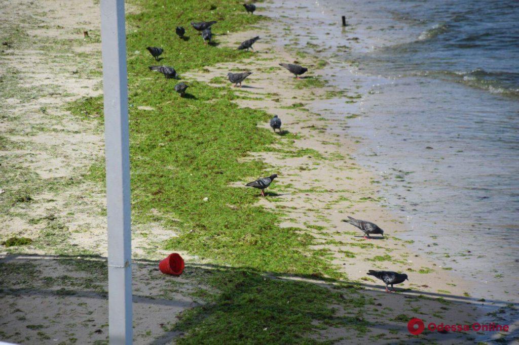 Одесса: холодное море и аншлаг на пляжах (фоторепортаж)