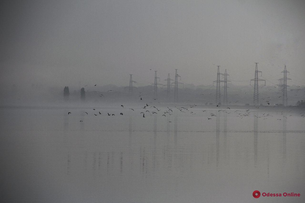 Змеи, птицы и лягушки: туманное утро на Хаджибейском лимане (фоторепортаж)