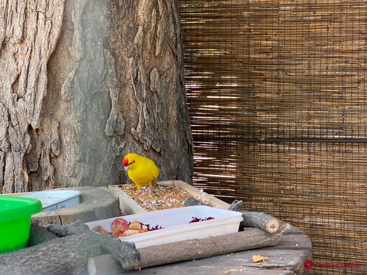 В одесском зоопарке — пополнение и переезды (фото)