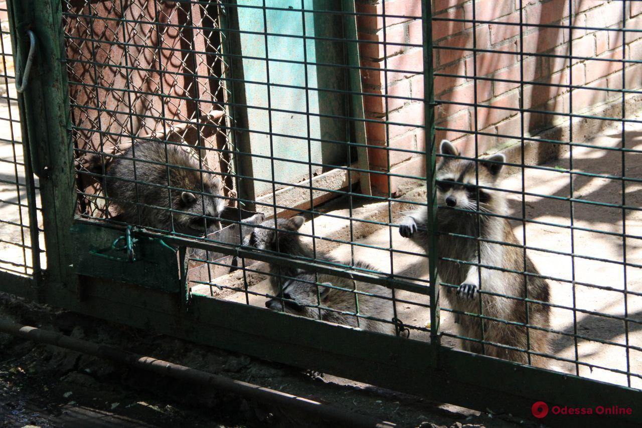 Солнечный день в одесском зоопарке (фото)