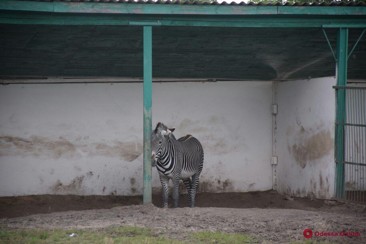 Путешествуем во время карантина: Аскания-Нова (фоторепортаж)