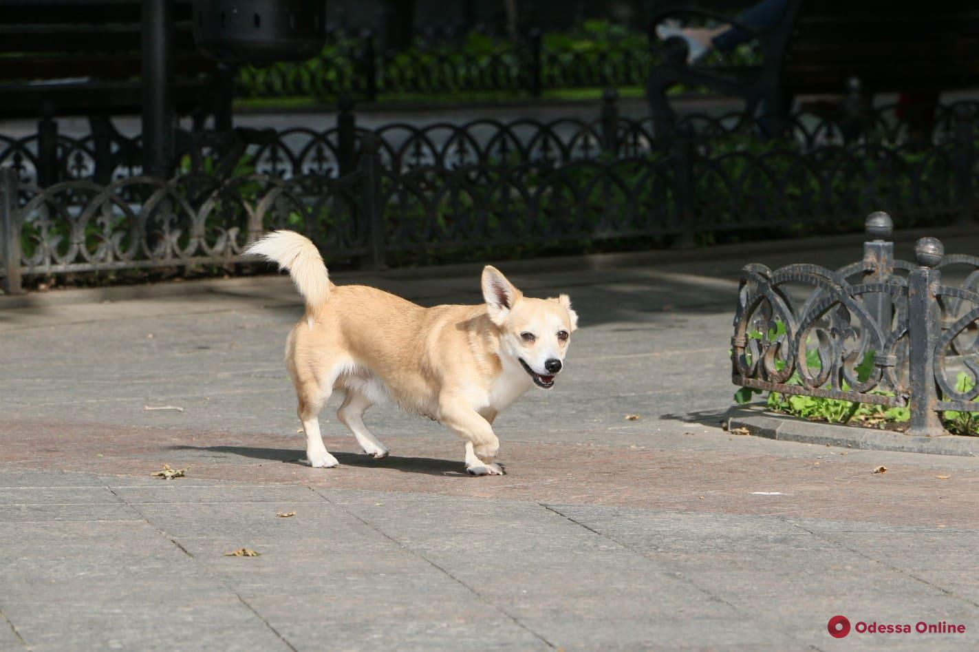 Самые лучшие мальчики и девочки: фотоподборка одесских барбосов ко Дню собак