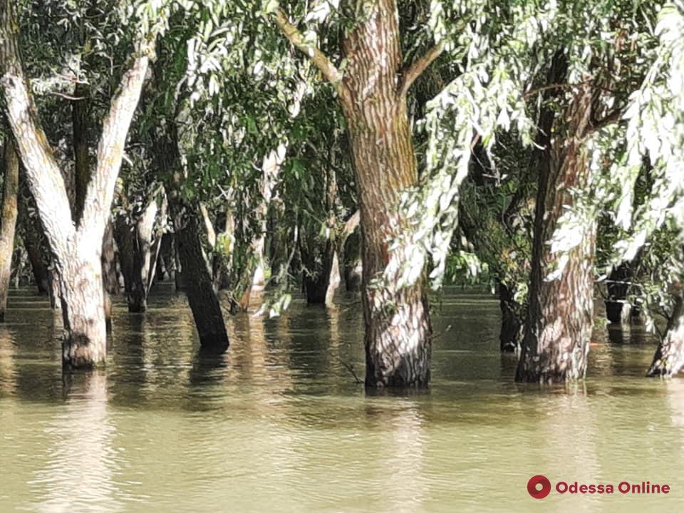 Одесская область: уровень воды в Днестре и Турунчуке приближается к опасным отметкам