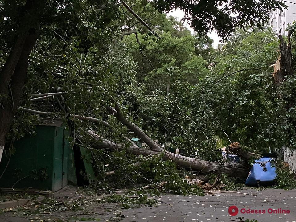 В Одессе два человека пострадали при падении деревьев