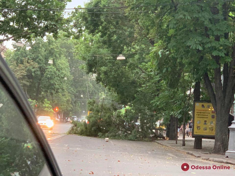 В Одессе коммунальщики ликвидируют последствия урагана