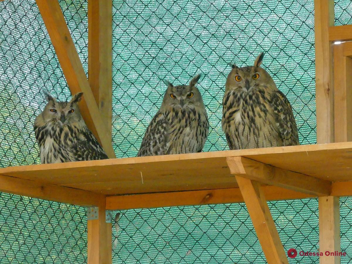 Сотрудники одесского зоопарка передали в Дунайский заповедник трёх филинов