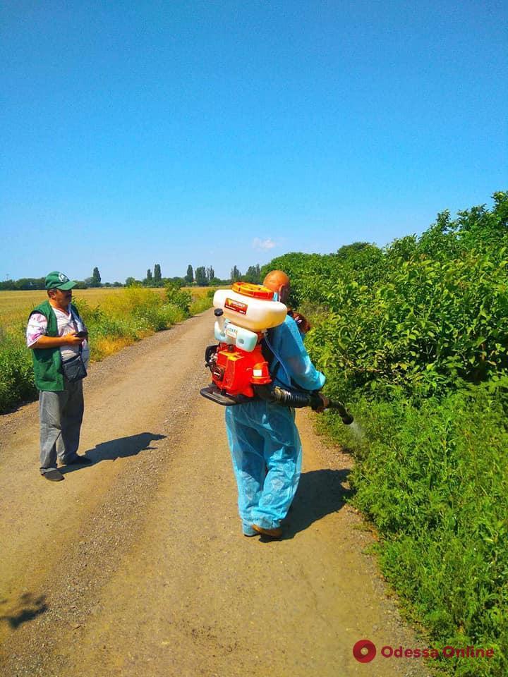 В Одессе создали «горячую линию» по вопросам уничтожения амброзии