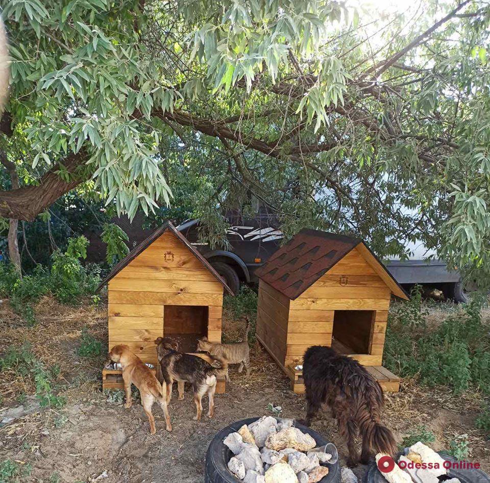 В Лузановке появились домики для бездомных кошек и собак