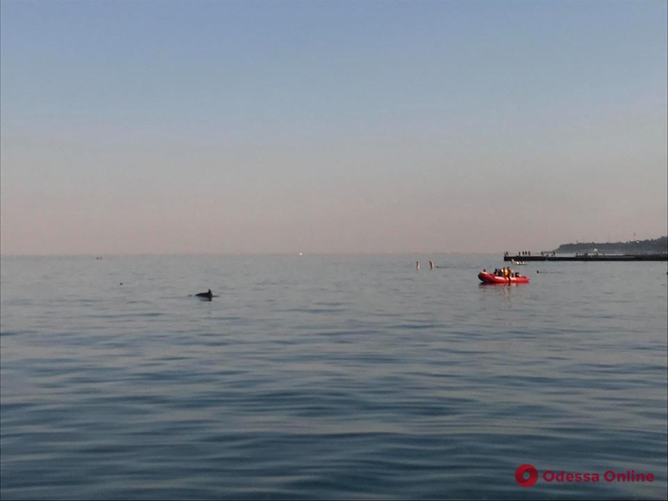 В Одессе семья дельфинов освободилась из пляжной ловушки