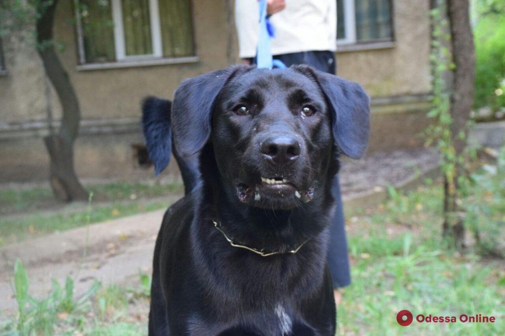 Одесский понедельник: яркие фото 20 июля