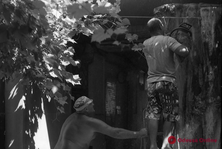 В одном из дворов на Успенской старое дерево превратили в скульптурную композицию