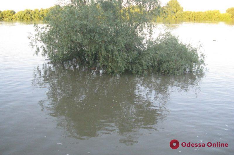 Реки Одесской области пропустили максимум паводковой волны из Западной Украины