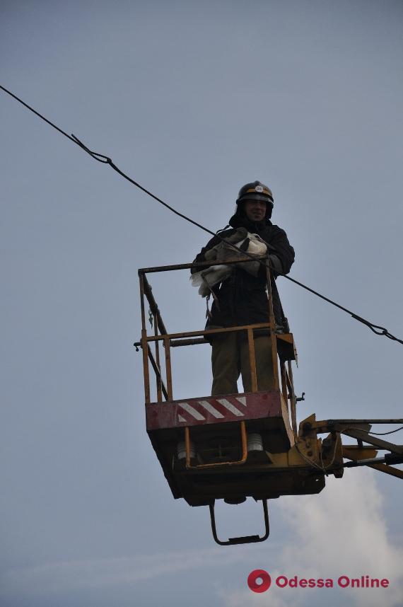 В Одесской области спасатели вызволяли запутавшегося в тросе аиста (фото)