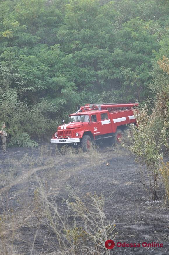 В Одесской области из-за пожара на мусорной свалке едва не загорелся сосновый лес