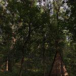 Лес 10