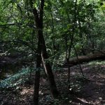 Лес 11