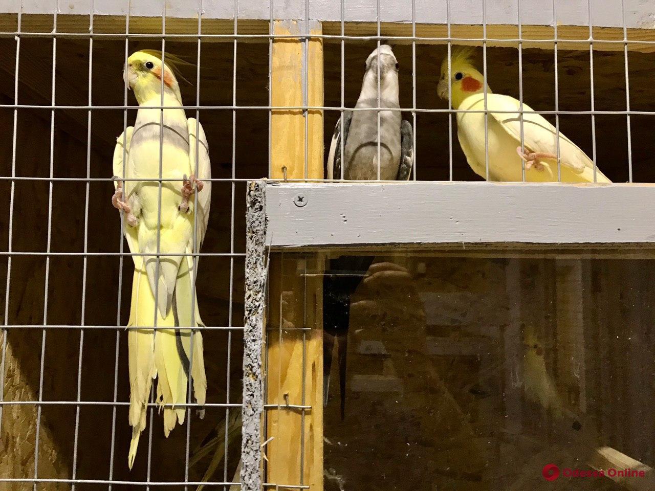 Раненые, потерянные, но не брошенные: как в реабилитационном центре Одесского зоопарка выхаживают птиц
