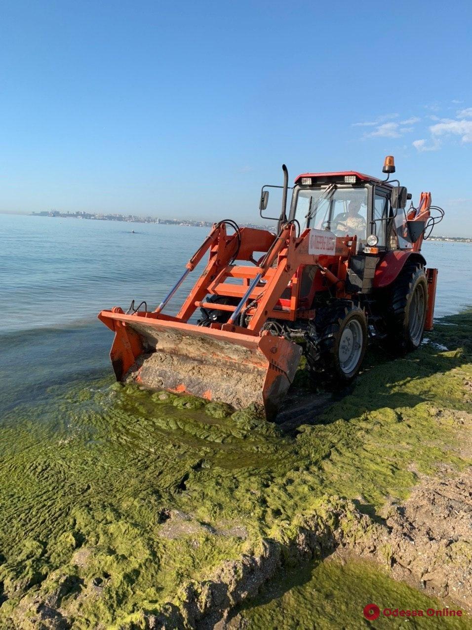 С пляжа «Лузановка» убрали 30 кубометров водорослей
