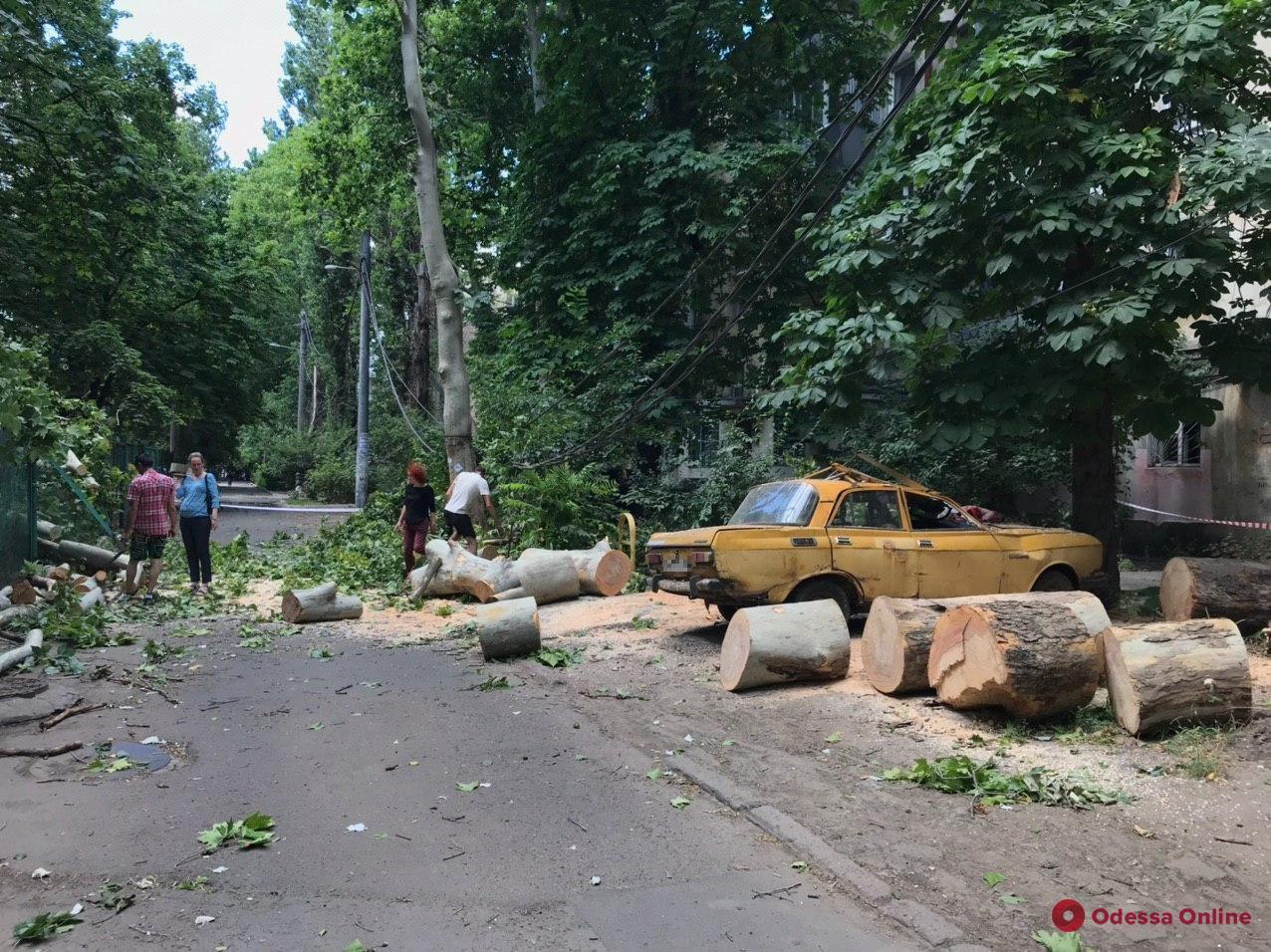На Черемушках упавшее дерево раздавило машину (фото)