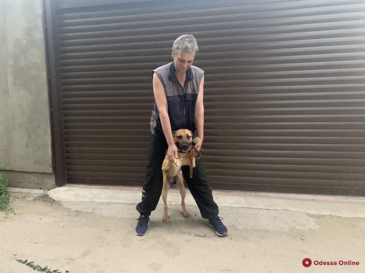 Хэппи-энды случаются: раненый одесским полицейским пес вернулся к хозяину